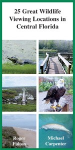25 Great Wildlife Viewing Locations in Central Florida